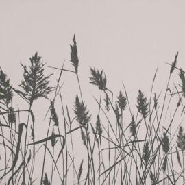 Grasses – Grey on Cream