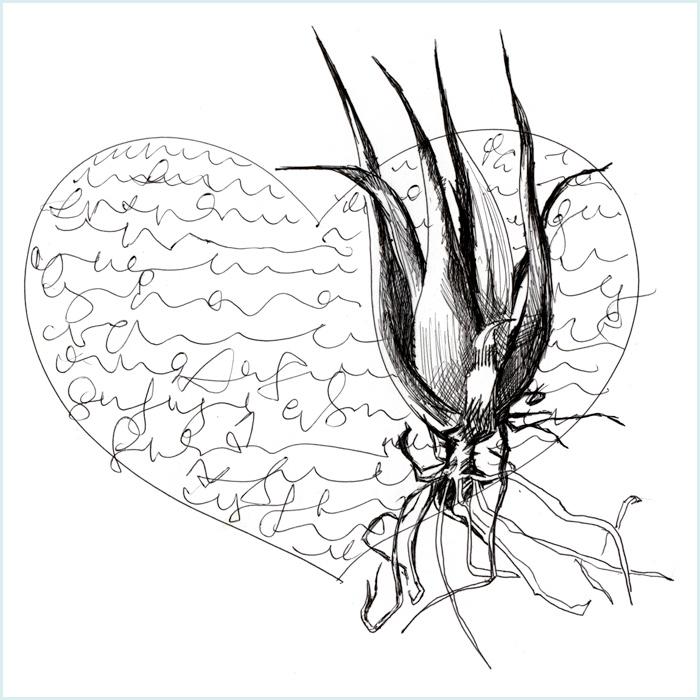 Aloe Scribble